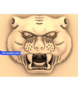 Head Chinese tiger