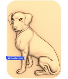 Dog №6